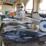 Al Kamil fish market oman www.gogoeverywhere.com